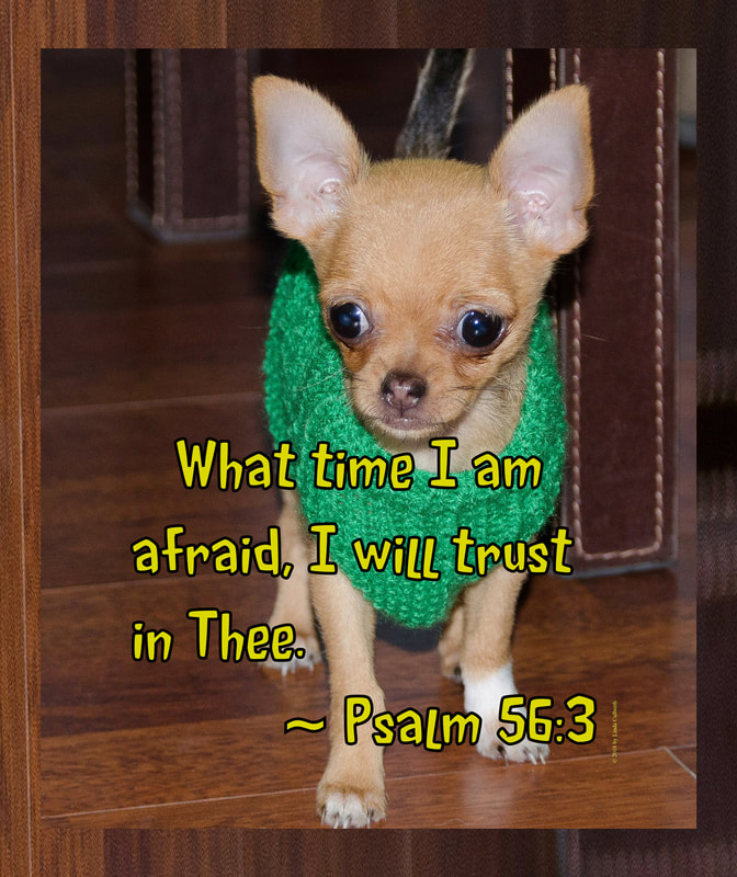 Chihuahua with Psalms 56:3