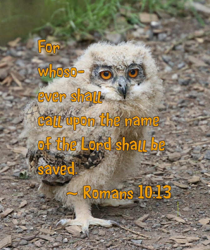 Wise Owl with  Romans 10:13