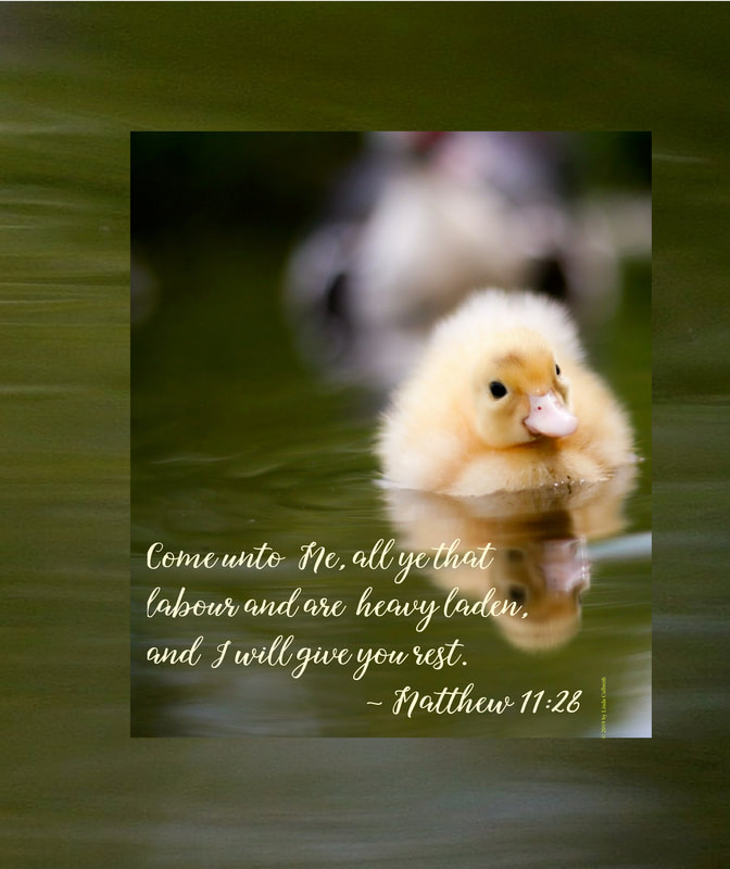 Paddling to God as Fast as I Can Go with Matthew 11:28